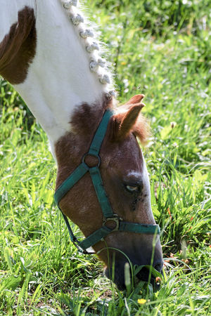 Little pony in the summer on a meadow Stock Photo