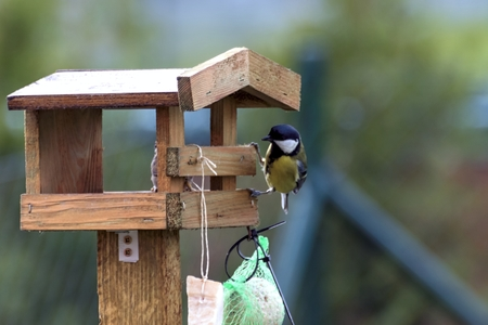 Titles feed in a feeder in autumn