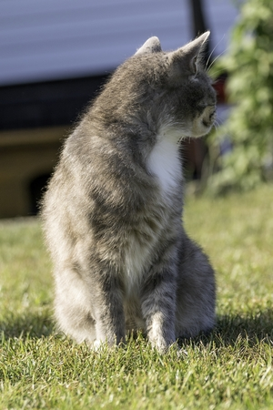 little cat playing on lawn in summer