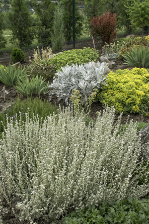 ornamental garden at the house in summer full of plants Stock Photo