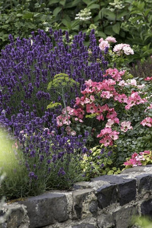 park with beautiful colorful plants in summer