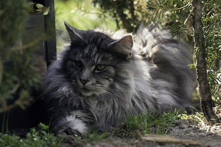 beautiful cat in the garden