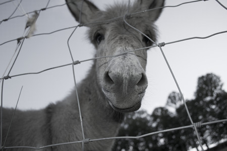 worms-eye view of donkey