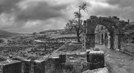 Tree and ruins in roman town Cuicul at village Djemila, Algeria 免版税图像