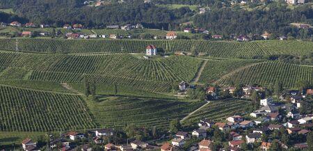 Vineyards at Skalce, Slovenske Konjice, Slovenia