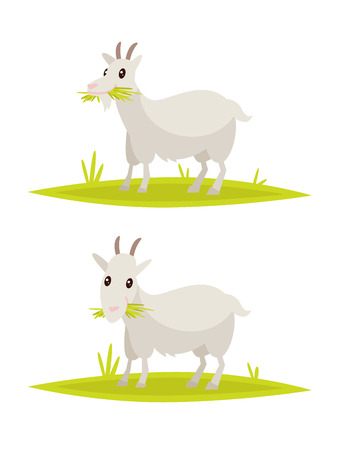 Funny goat set. Vector illustration of a flat design