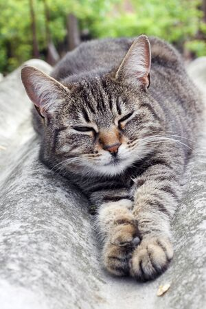 Tabby cat lying on a slate roof and resting