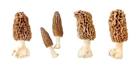 Collage of different morel mushroom isolated on white background