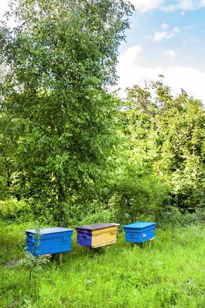 Colorful hives in apiary in a summer garden Banco de Imagens
