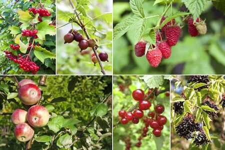 Colorful collage of various fruits and berries in garden