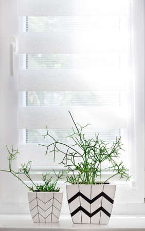 Two white square flower pots with geometric patterns with rhipsalis plants planted in them stand on windowsill in white and gray interior Archivio Fotografico