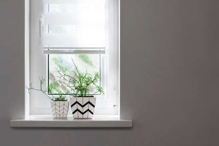 Two white square flower pots with geometric patterns with rhipsalis plants planted in them stand on windowsill with partially raised roller blind