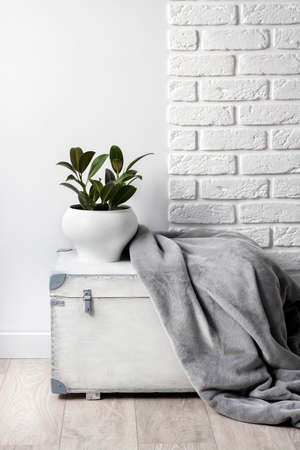 White wooden box with young rubber plant in white flower pot and gray soft fleece blanket on it. White wall with bricks on background