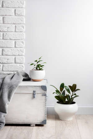 White wooden box and young home plants in white flower pots on white wall background. Copy space 版權商用圖片