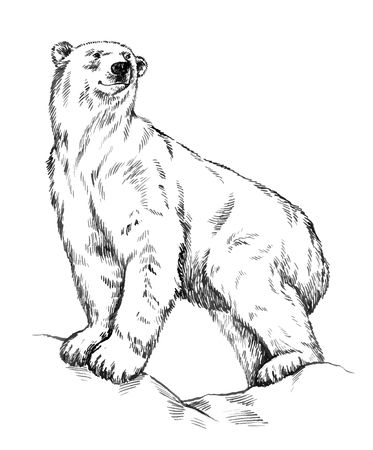 tundra: black and white engrave ink draw isolated vector polar bear Illustration