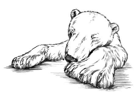 zwart en wit graveren inkt tekenen geïsoleerd vector ijsbeer Vector Illustratie