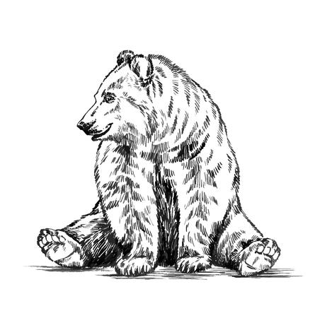 zwart en wit graveren inkt tekenen geïsoleerd vector grizzly beer