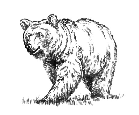 black and white engrave ink draw isolated vector grizzly bear