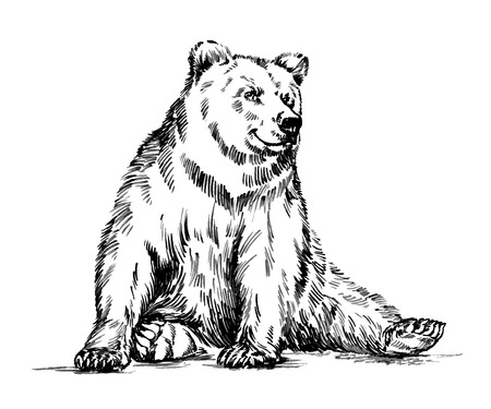 tundra: black and white engrave ink draw isolated vector grizzly bear