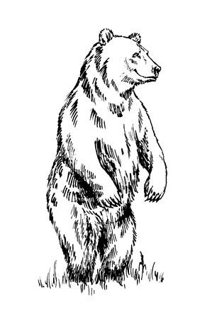 oso negro: tinta grabado en blanco y negro dibujar aislado vector de oso pardo Vectores