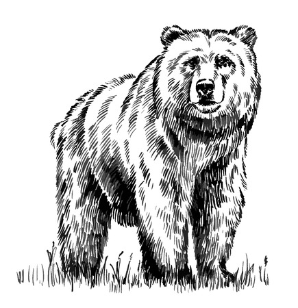 black and white engrave ink draw isolated vector grizzly bear Reklamní fotografie - 49814487