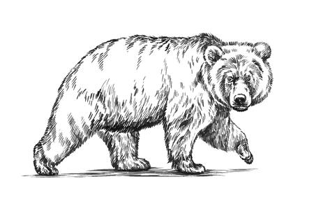 arboles blanco y negro: tinta grabado en blanco y negro dibujar aislado vector de oso pardo Vectores