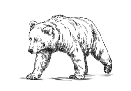 agressive: black and white engrave ink draw isolated grizzly bear Stock Photo