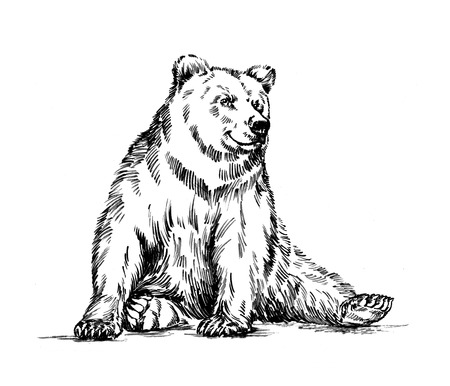 tundra: black and white engrave ink draw isolated grizzly bear Stock Photo
