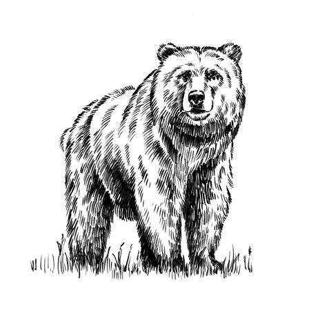 黒と白を刻むインク描画の孤立したグリズリー ・ ベアー