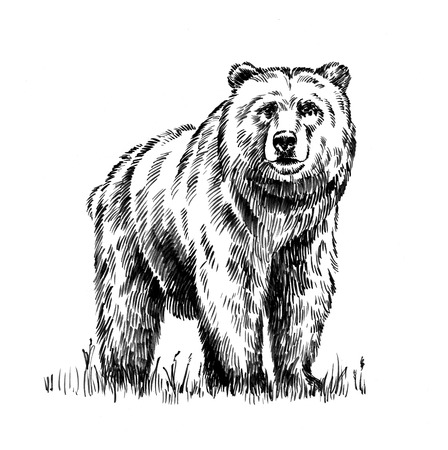 black and white engrave ink draw isolated grizzly bear Banco de Imagens