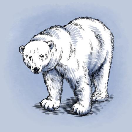 tundra: color engrave ink draw isolated polar bear Stock Photo