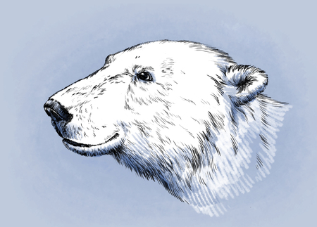 agressive: color engrave ink draw isolated polar bear Stock Photo