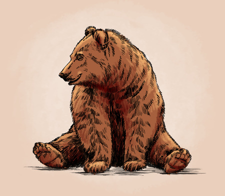 color engrave ink draw isolated grizzly bear Stockfoto