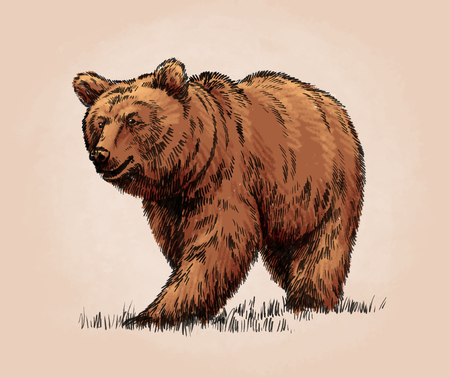 tundra: color engrave ink draw isolated grizzly bear Stock Photo