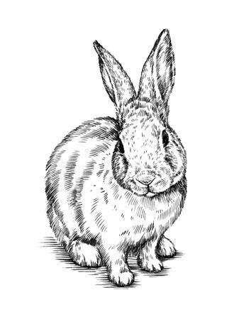 black and white brush painting ink draw isolated rabbit illustration