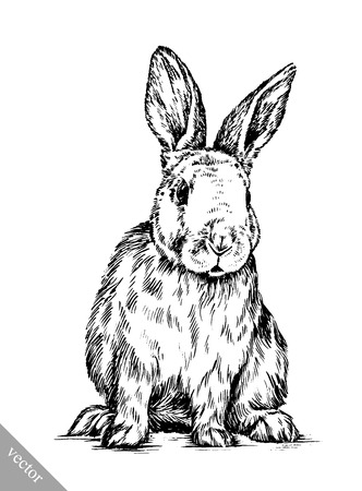 black and white vector brush painting ink draw isolated rabbit illustration Ilustrace
