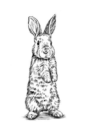 black and white brush painting ink draw isolated rabbit illustration Imagens - 49814903