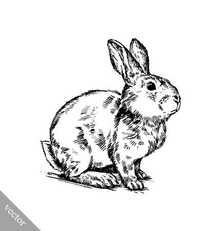 lapin blanc: vecteur peinture au pinceau encre noir et blanc dessiner isolé lapin illustration