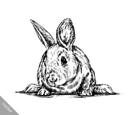 black and white vector brush painting ink draw isolated rabbit illustration Illustration