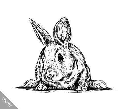 lapin blanc: vecteur peinture au pinceau encre noir et blanc dessiner isol� lapin illustration