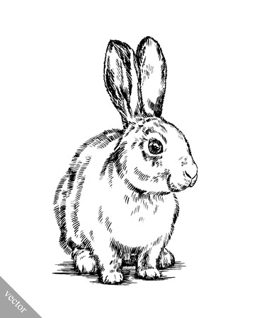 black and white vector brush painting ink draw isolated rabbit illustration
