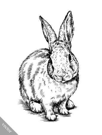 vecteur peinture au pinceau encre noir et blanc dessiner isolé lapin illustration