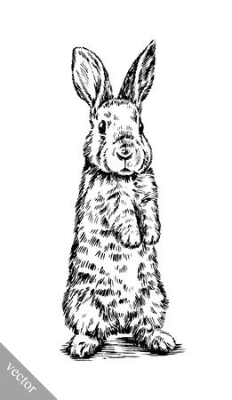 white rabbit: black and white vector brush painting ink draw isolated rabbit illustration Illustration