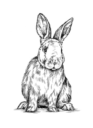 black and white farm: black and white brush painting ink draw isolated rabbit illustration
