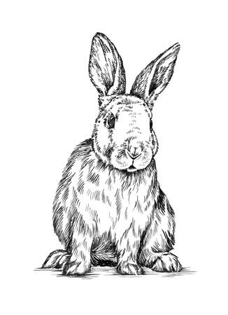 conejo: tinta pintura de pincel blanco y negro dibujar aislado de conejo ilustración