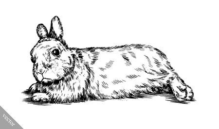 black and white vector brush painting ink draw isolated rabbit illustration Stock Illustratie