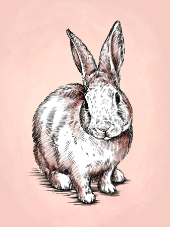 color brush painting ink draw isolated rabbit illustration
