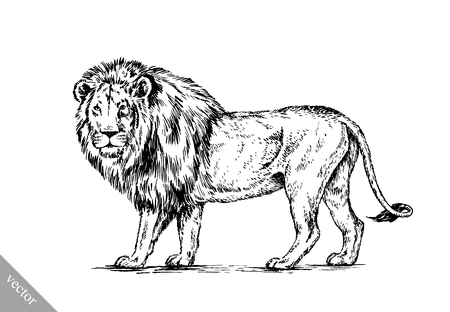 prideful: black and white brush painting ink draw vector isolated lion illustration Illustration