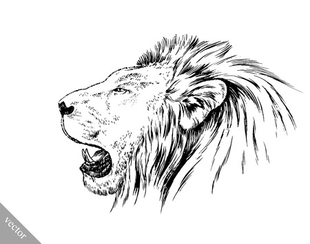 draw: black and white brush painting ink draw vector isolated lion illustration Illustration