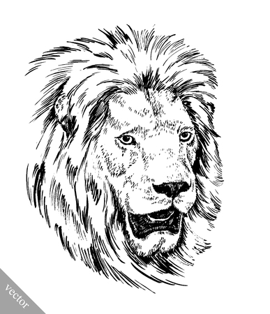 black and white brush painting ink draw vector isolated lion illustration Illustration